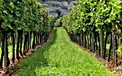 El vino tiene alma. Proviene del suelo